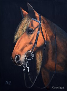cheval_copyright_m